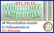 STL-Bibliothek 28 Wurzelzähne